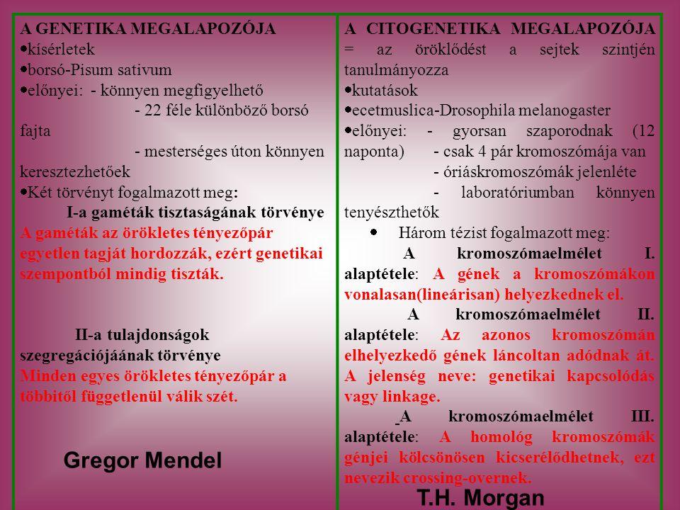 Gregor Mendel T.H. Morgan A GENETIKA MEGALAPOZÓJA kísérletek