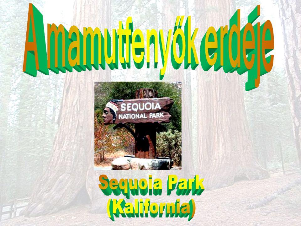 A mamutfenyők erdeje Sequoia Park (Kalifornia)
