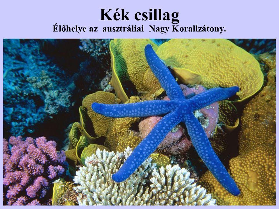 Élőhelye az ausztráliai Nagy Korallzátony.
