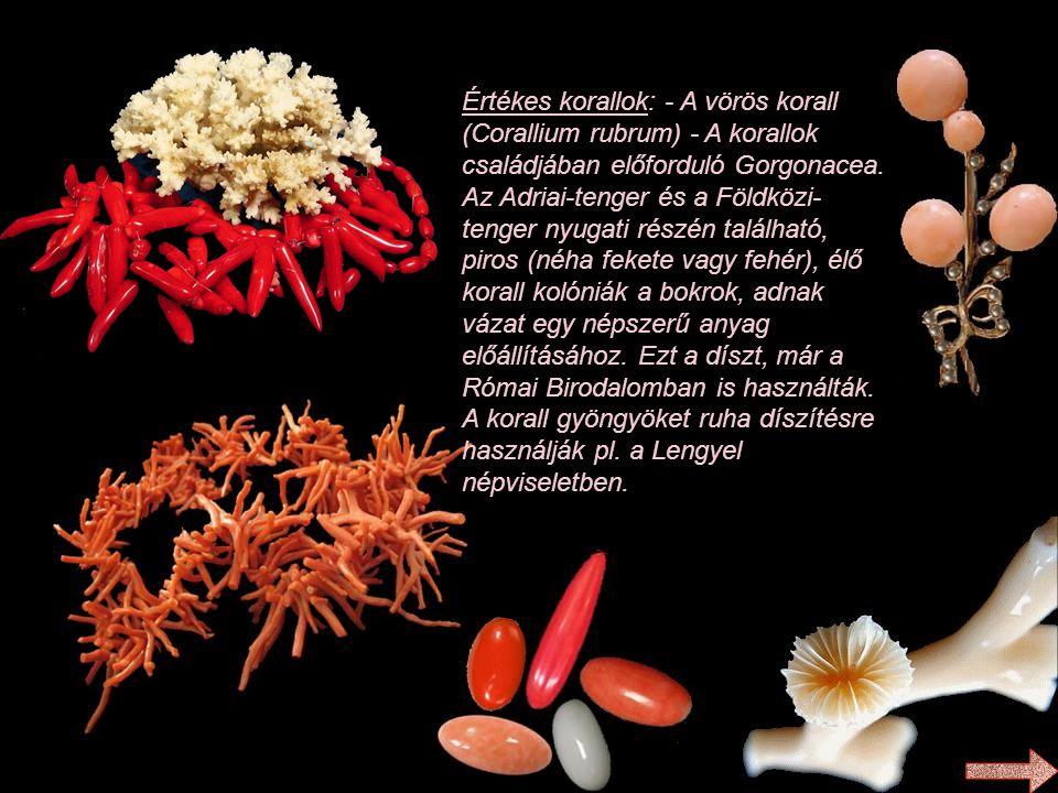Értékes korallok: - A vörös korall (Corallium rubrum) - A korallok családjában előforduló Gorgonacea.