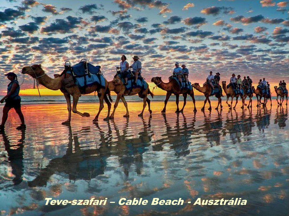 Teve-szafari – Cable Beach - Ausztrália