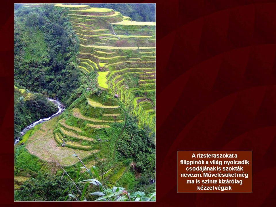 A rizsteraszokat a filippínók a világ nyolcadik csodájának is szokták nevezni.
