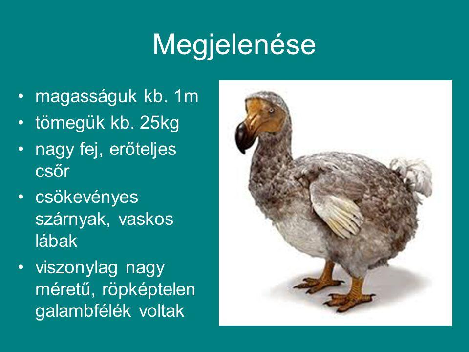 Megjelenése magasságuk kb. 1m tömegük kb. 25kg