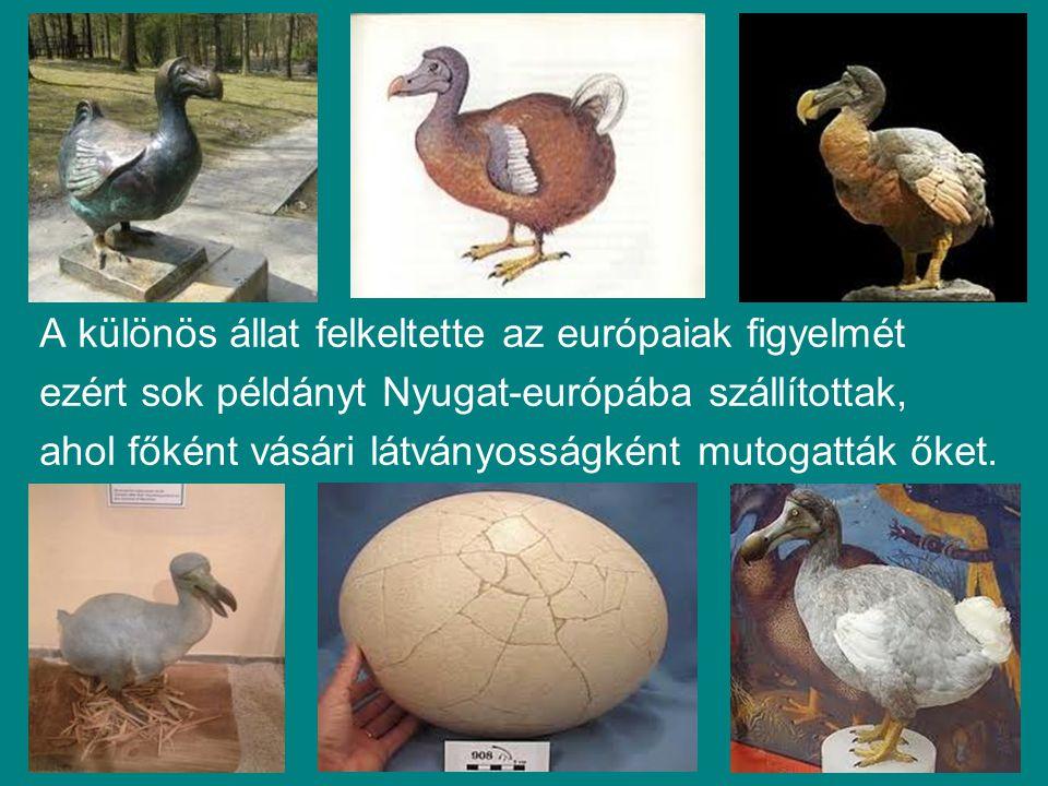 A különös állat felkeltette az európaiak figyelmét