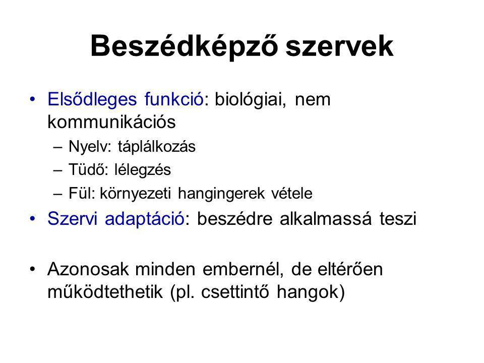 Beszédképző szervek Elsődleges funkció: biológiai, nem kommunikációs