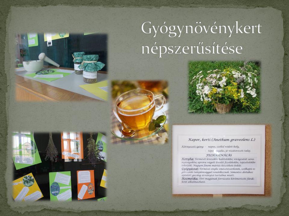 Gyógynövénykert népszerűsítése