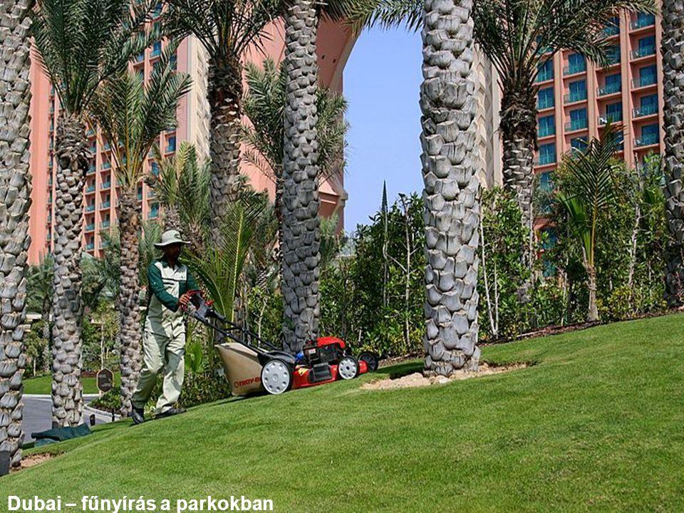 Dubai – fűnyírás a parkokban