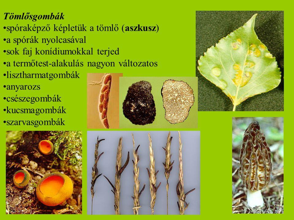 Tömlősgombák spóraképző képletük a tömlő (aszkusz) a spórák nyolcasával. sok faj konídiumokkal terjed.