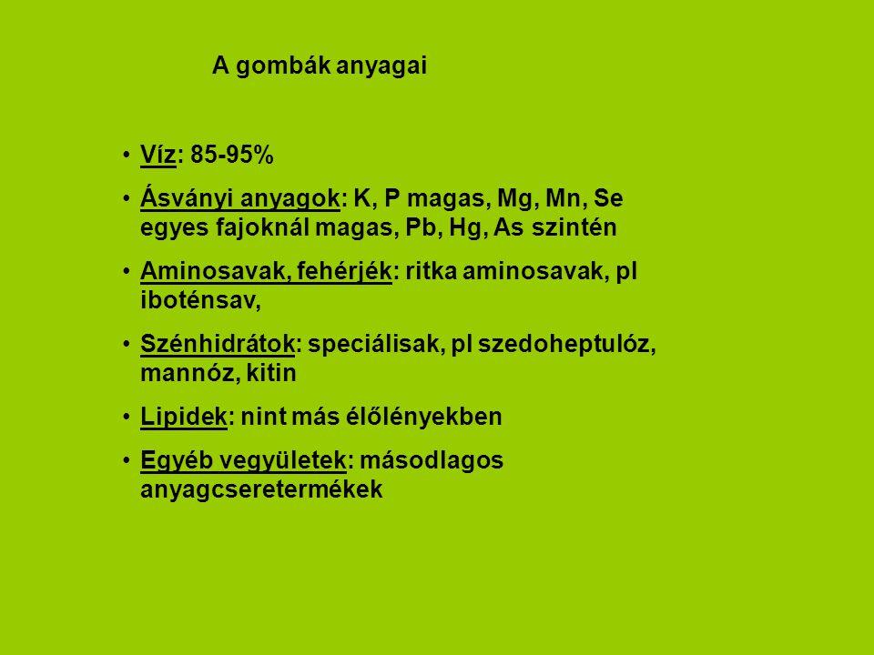 A gombák anyagai Víz: 85-95% Ásványi anyagok: K, P magas, Mg, Mn, Se egyes fajoknál magas, Pb, Hg, As szintén.