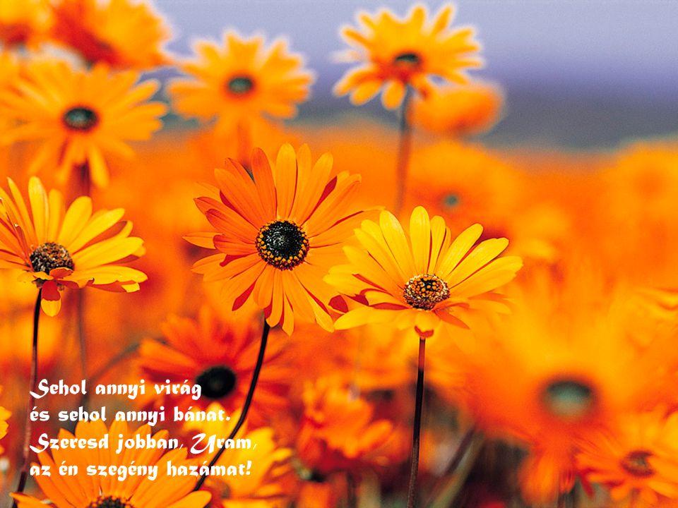Sehol annyi virág és sehol annyi bánat