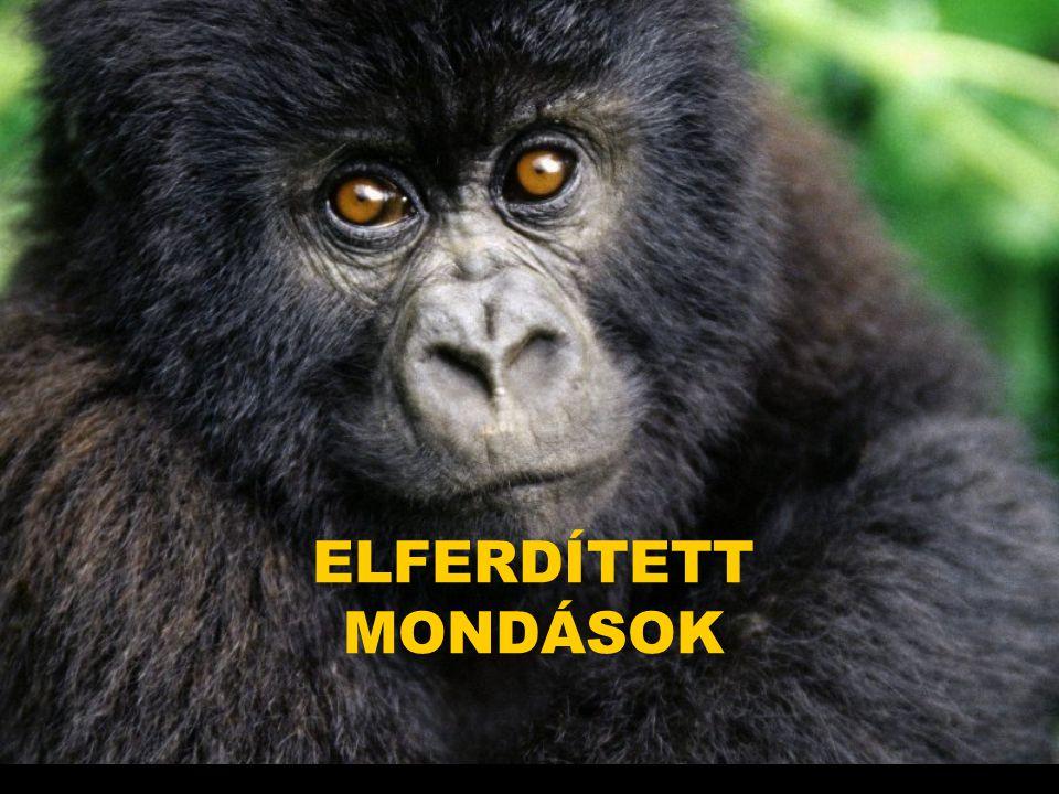 ELFERDÍTETT MONDÁSOK