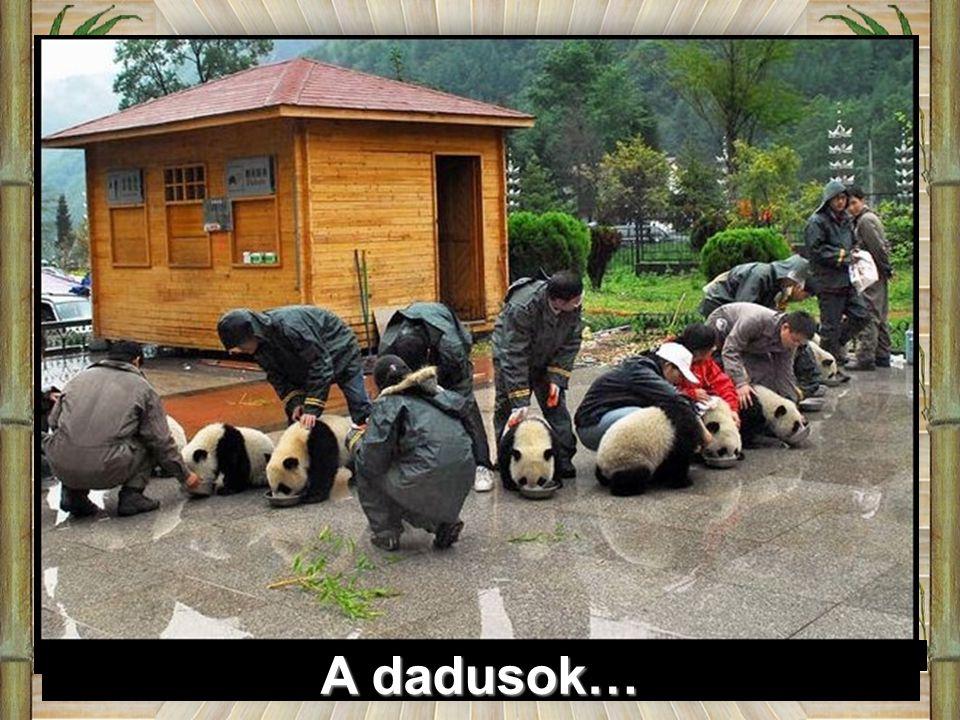 A dadusok…
