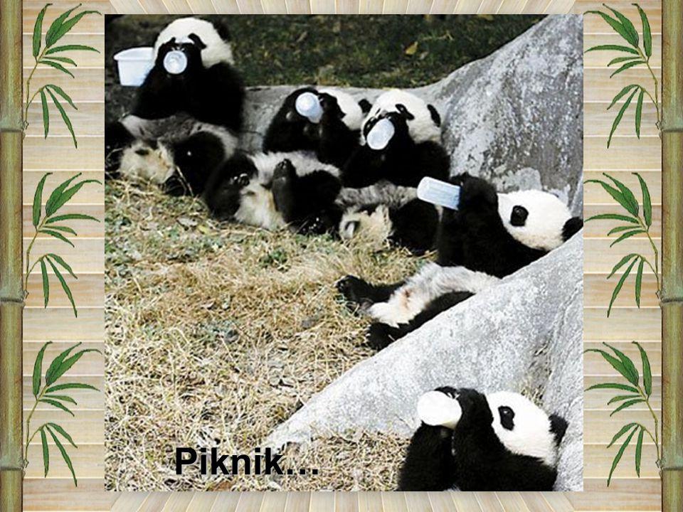 Piknik…