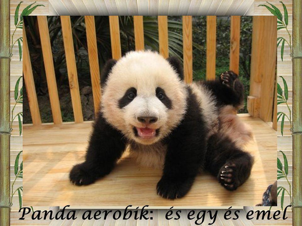 Panda aerobik: és egy és emel