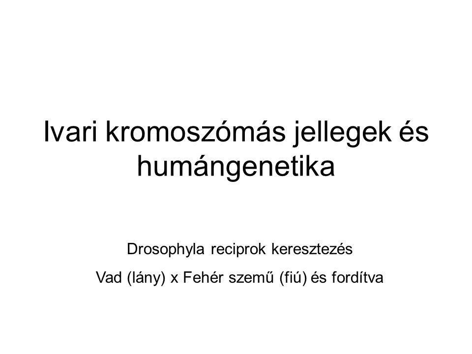 Ivari kromoszómás jellegek és humángenetika