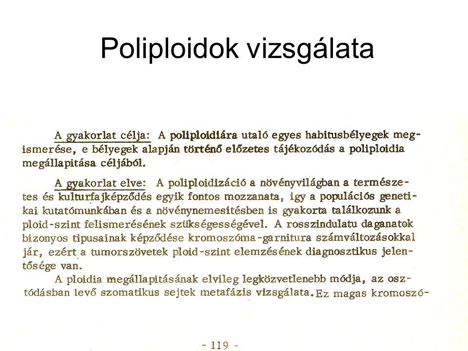 Poliploidok vizsgálata