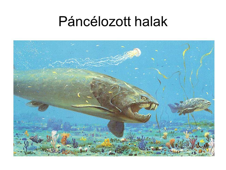 Páncélozott halak