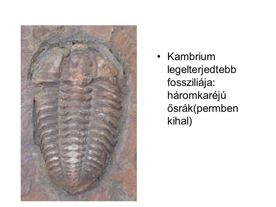 Kambrium legelterjedtebb fossziliája: háromkaréjú ősrák(permben kihal)