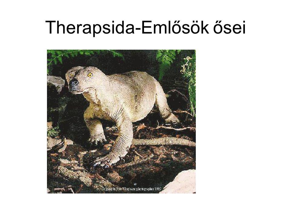 Therapsida-Emlősök ősei