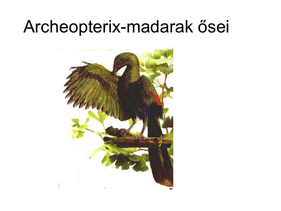 Archeopterix-madarak ősei