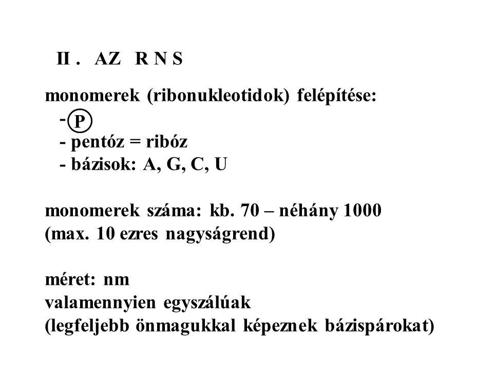 II . AZ R N S monomerek (ribonukleotidok) felépítése: - - pentóz = ribóz. - bázisok: A, G, C, U.
