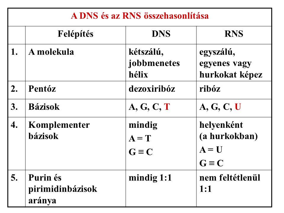 A DNS és az RNS összehasonlítása