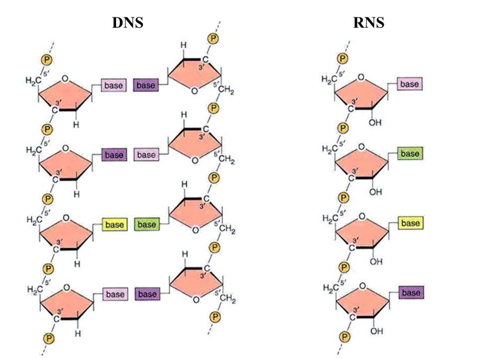 DNS RNS