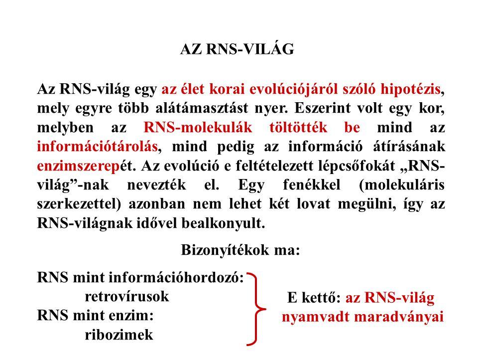 AZ RNS-VILÁG