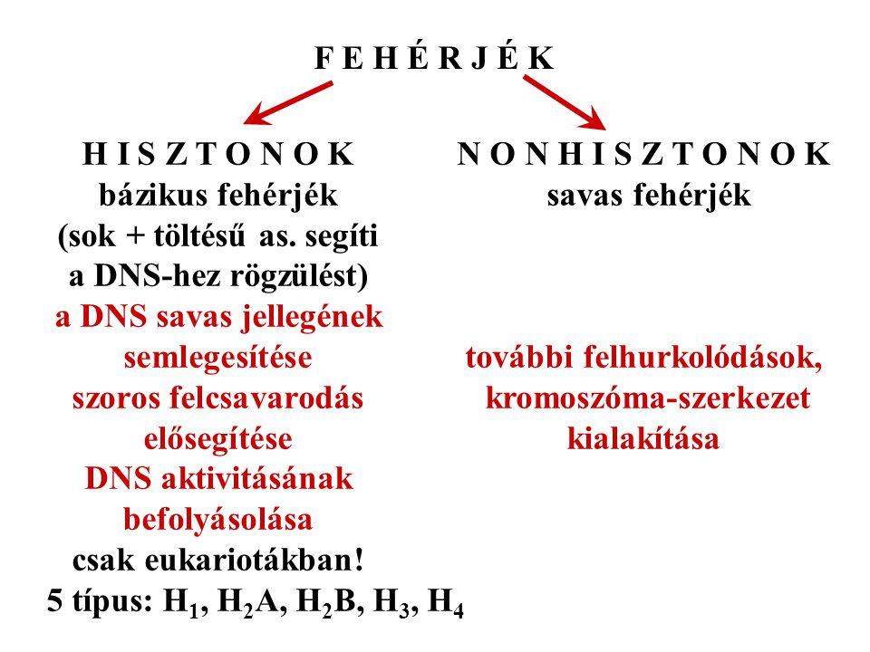 F E H É R J É K H I S Z T O N O K N O N H I S Z T O N O K. bázikus fehérjék savas fehérjék. (sok + töltésű as. segíti.