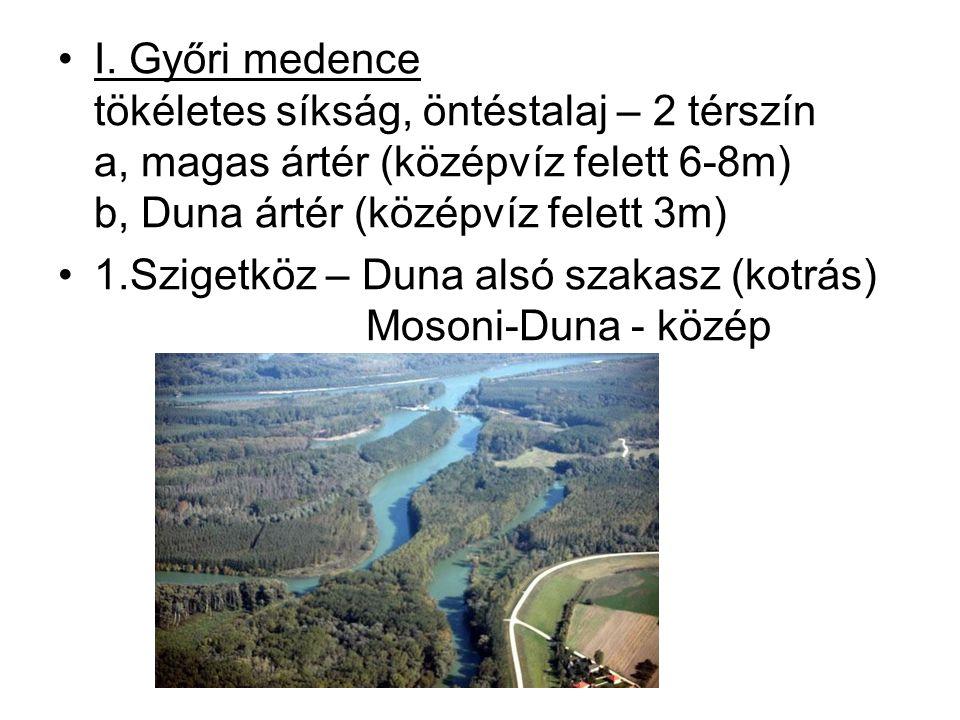 I. Győri medence tökéletes síkság, öntéstalaj – 2 térszín a, magas ártér (középvíz felett 6-8m) b, Duna ártér (középvíz felett 3m)