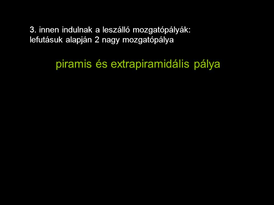 piramis és extrapiramidális pálya