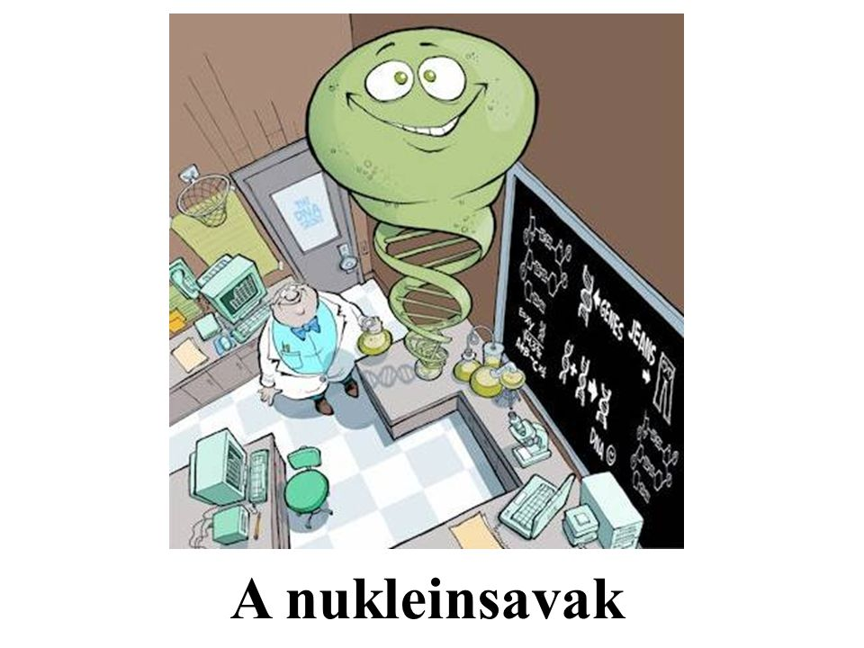 A nukleinsavak