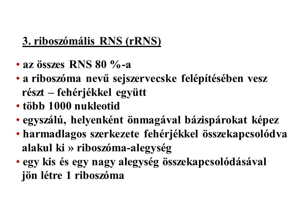 3. riboszómális RNS (rRNS)