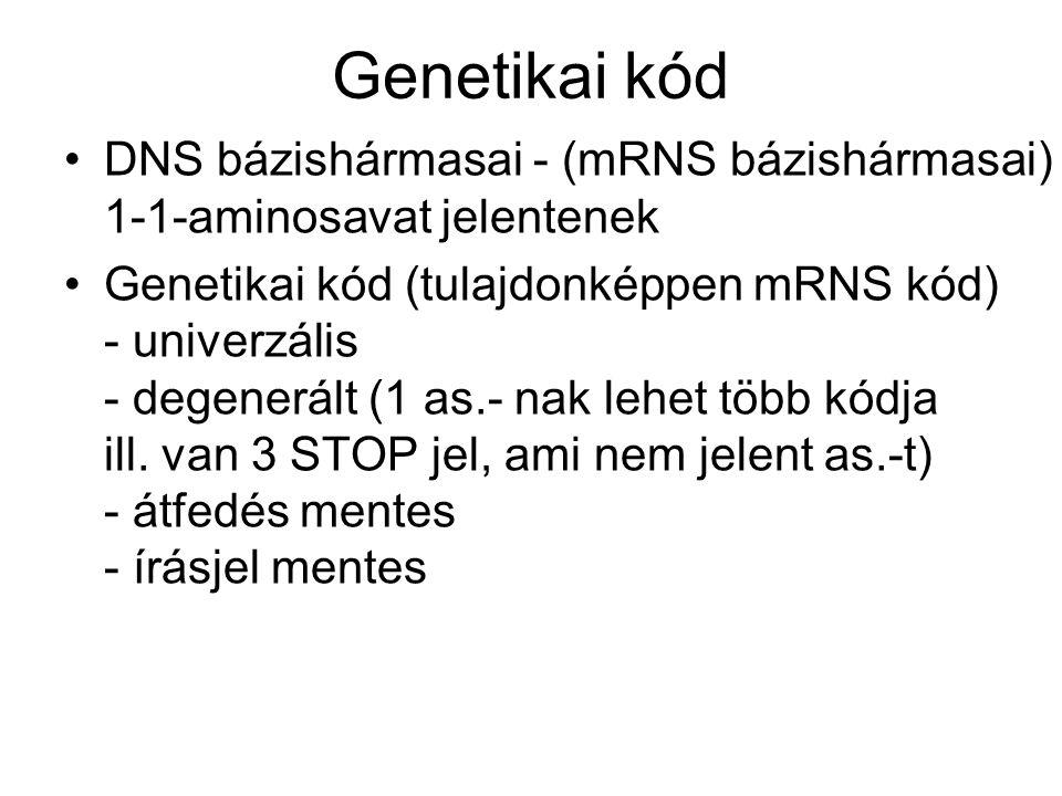 Genetikai kód DNS bázishármasai - (mRNS bázishármasai) 1-1-aminosavat jelentenek.