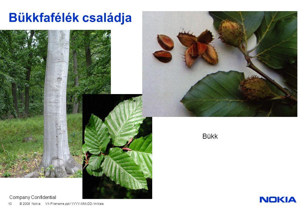 Bükkfafélék családja Bükk