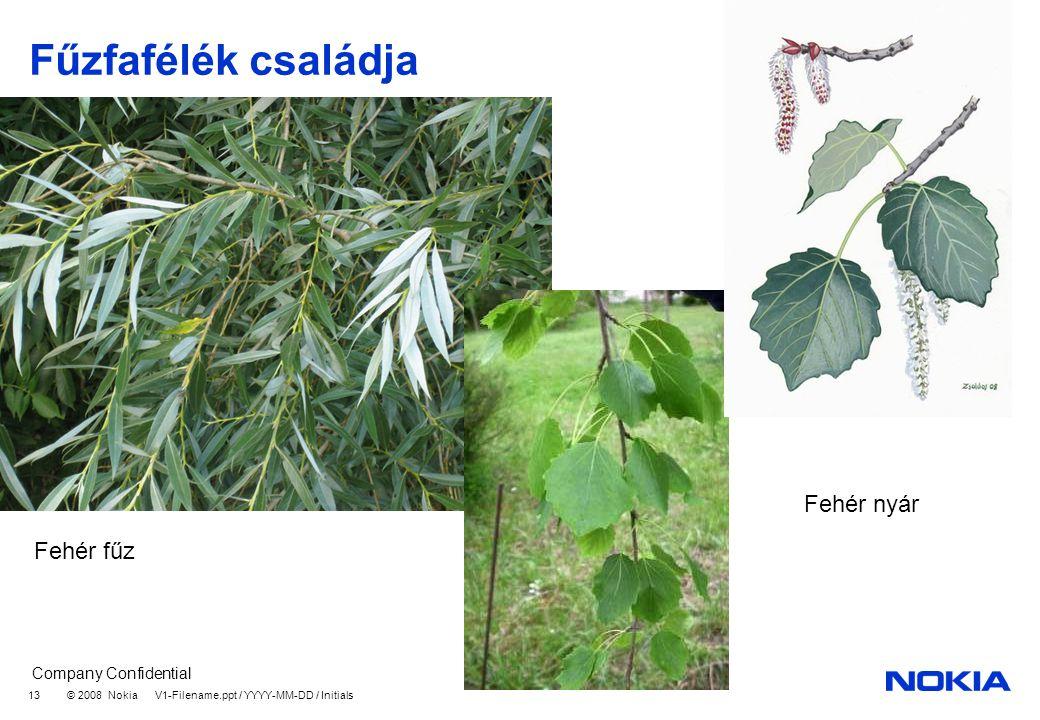 Fűzfafélék családja Fehér nyár Fehér fűz