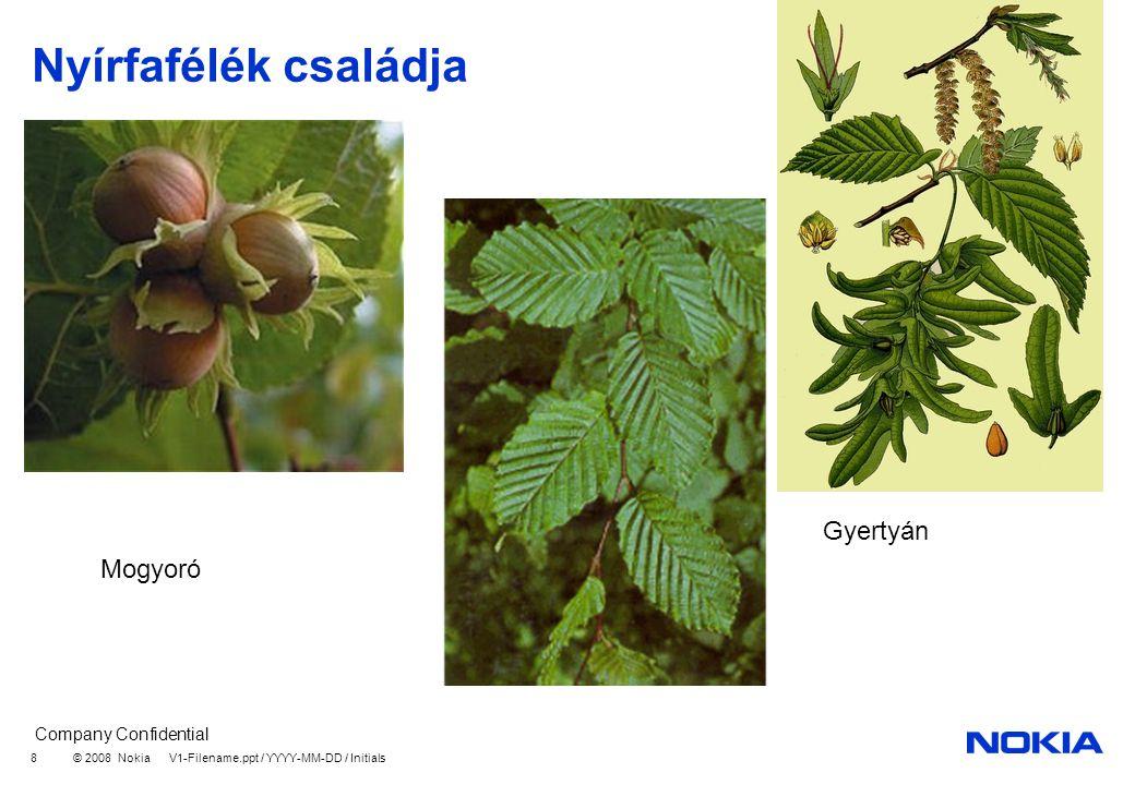 Nyírfafélék családja Gyertyán Mogyoró