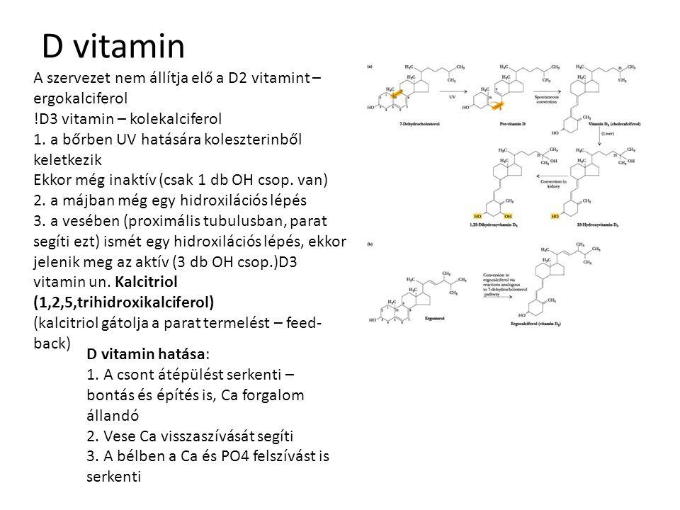 D vitamin A szervezet nem állítja elő a D2 vitamint – ergokalciferol