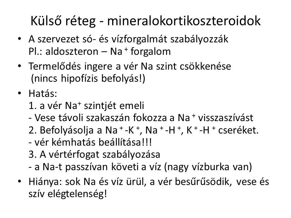 Külső réteg - mineralokortikoszteroidok