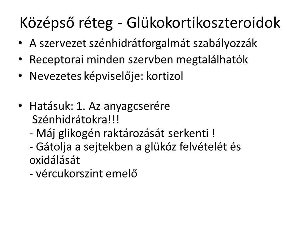 Középső réteg - Glükokortikoszteroidok