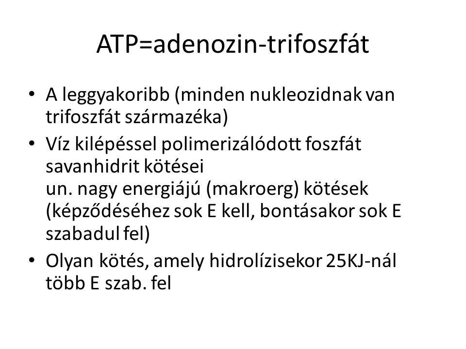 ATP=adenozin-trifoszfát