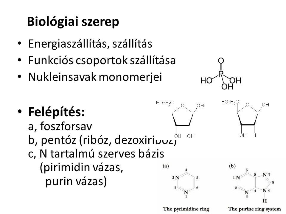 Biológiai szerep Energiaszállítás, szállítás. Funkciós csoportok szállítása. Nukleinsavak monomerjei.