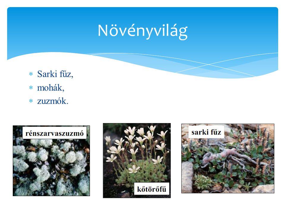 Növényvilág Sarki fűz, mohák, zuzmók.