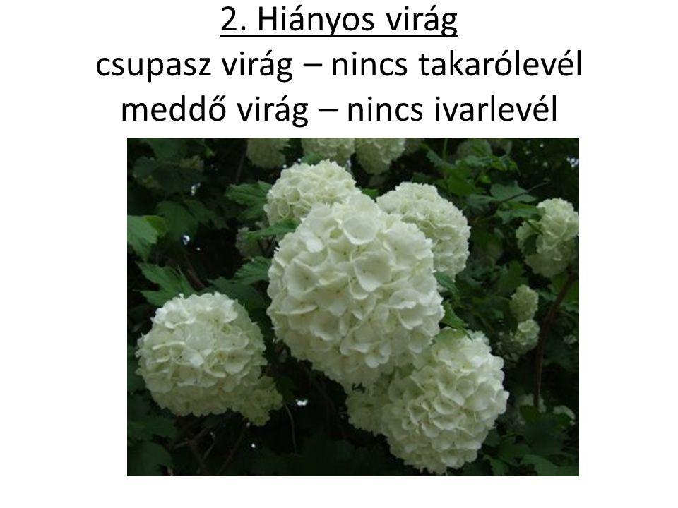2. Hiányos virág csupasz virág – nincs takarólevél meddő virág – nincs ivarlevél