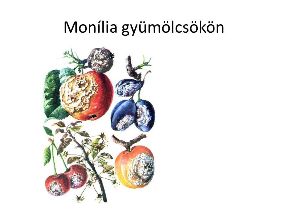 Monília gyümölcsökön