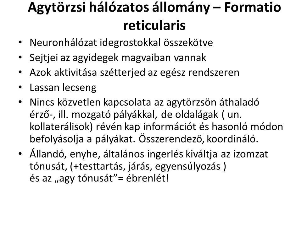 Agytörzsi hálózatos állomány – Formatio reticularis