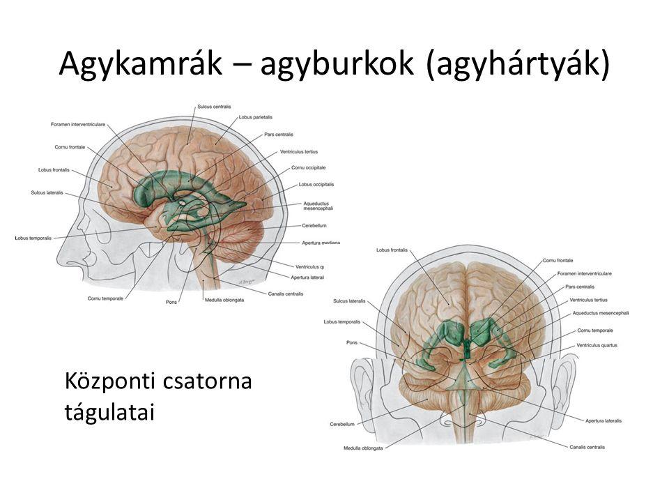 Agykamrák – agyburkok (agyhártyák)