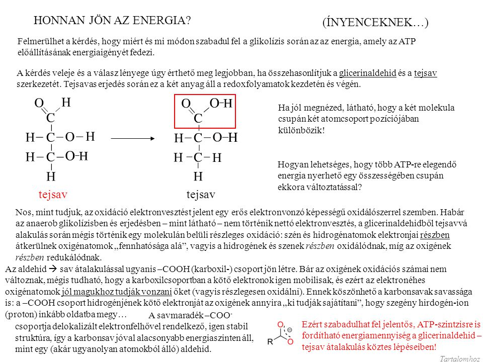 HONNAN JÖN AZ ENERGIA (ÍNYENCEKNEK…) glicerinaldehid tejsav tejsav