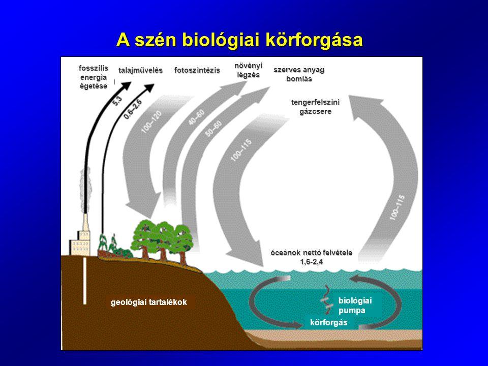 A szén biológiai körforgása