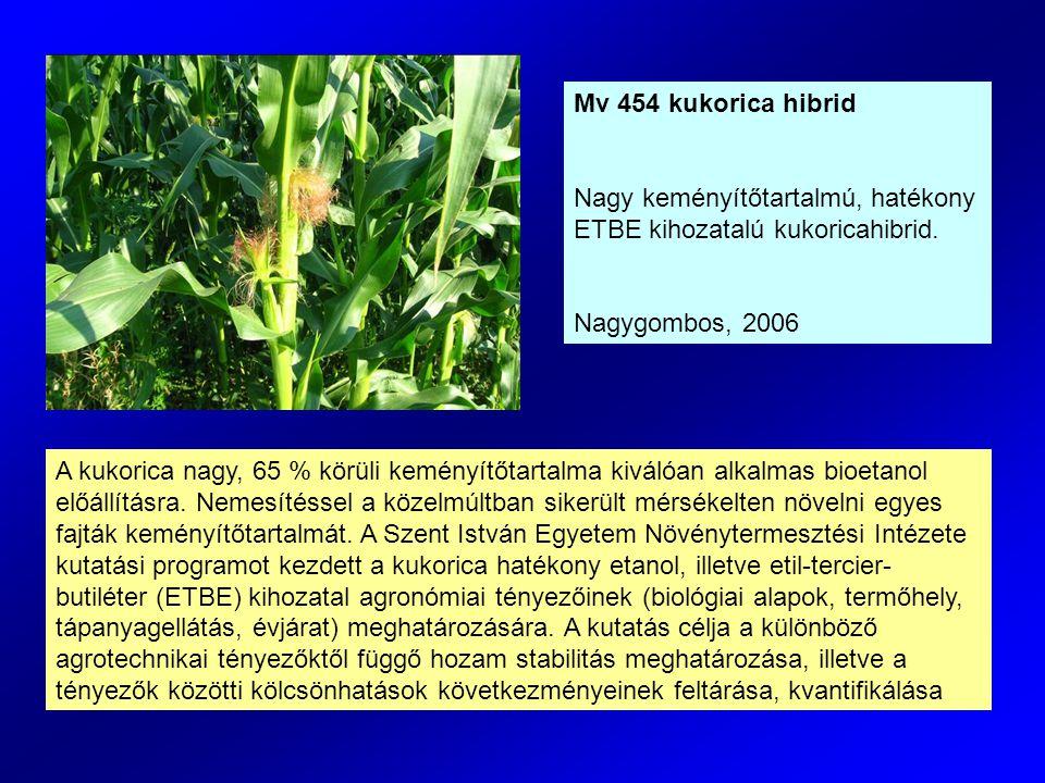 Mv 454 kukorica hibrid Nagy keményítőtartalmú, hatékony ETBE kihozatalú kukoricahibrid. Nagygombos, 2006.